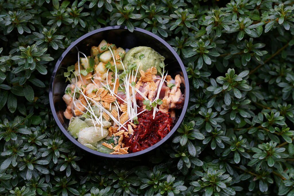 Poke bowl on top of dark green plant