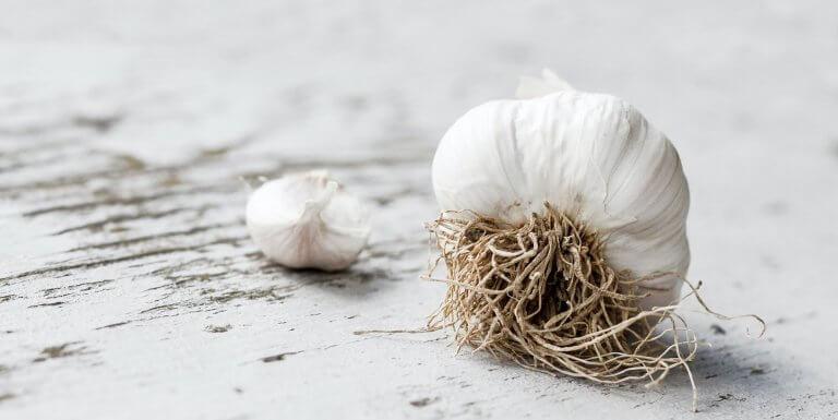 Garlic head on white wooden background