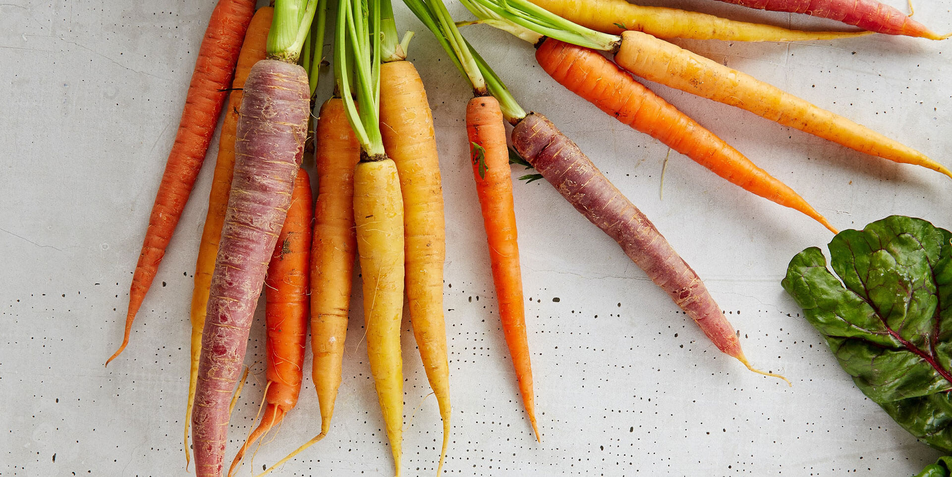 Bunch of carrots on a white, wood surface